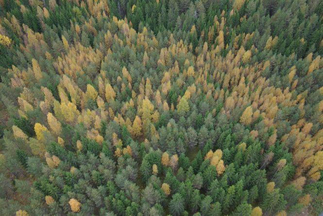 Metsä. Kuva Tomi J