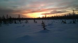 hiihtoretkeltä aurinko ja pienet puut